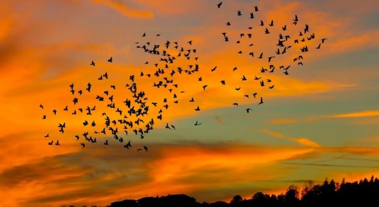 Velké asijské ptáky